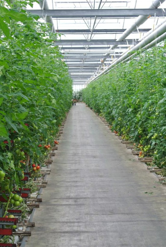 Tomato grower slices energy costs with Perkins powered CHP unit